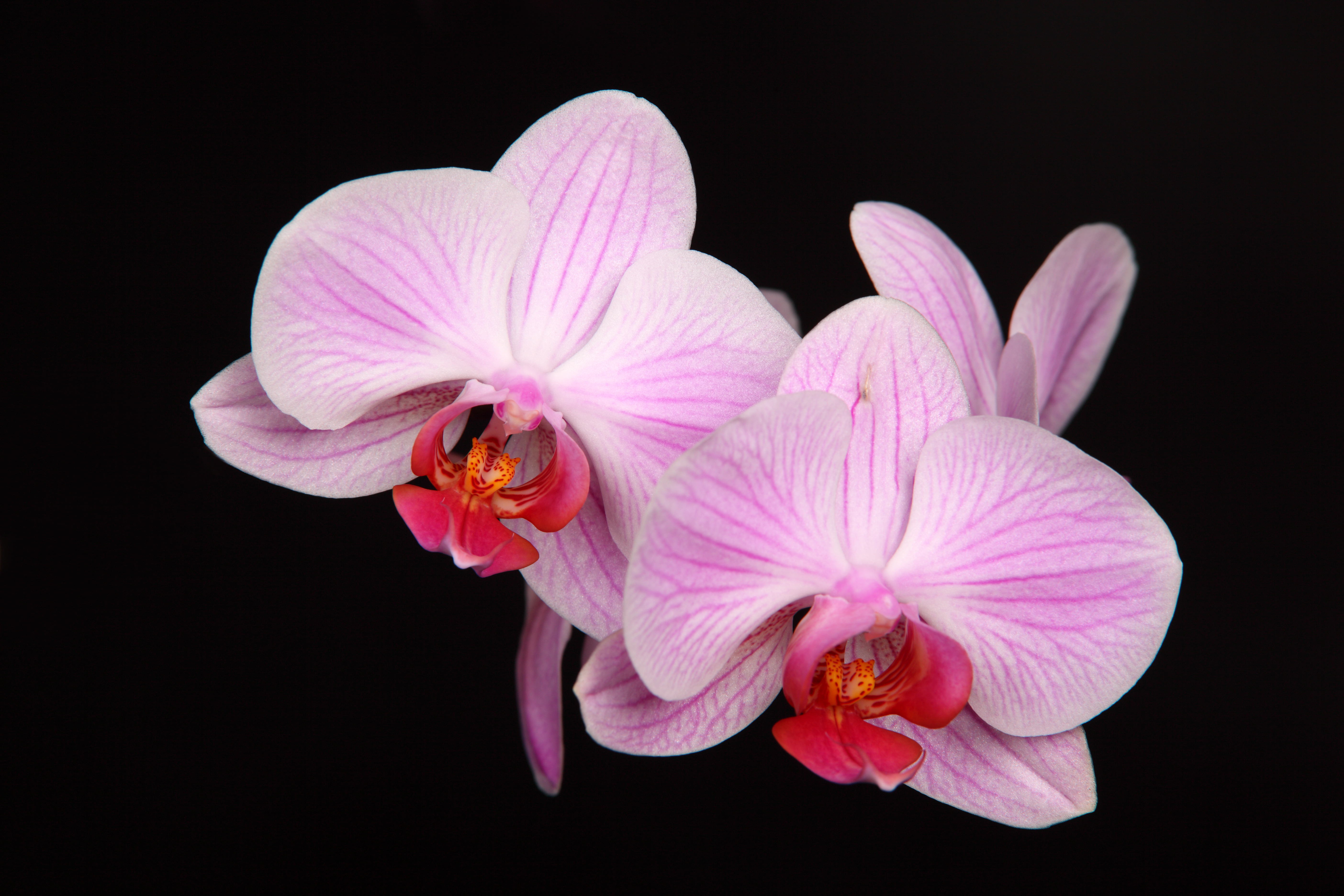 Design Science: Why Pantone Chose Orchid As Color of the ...