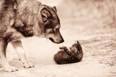 kitten-and-dog-photo-3