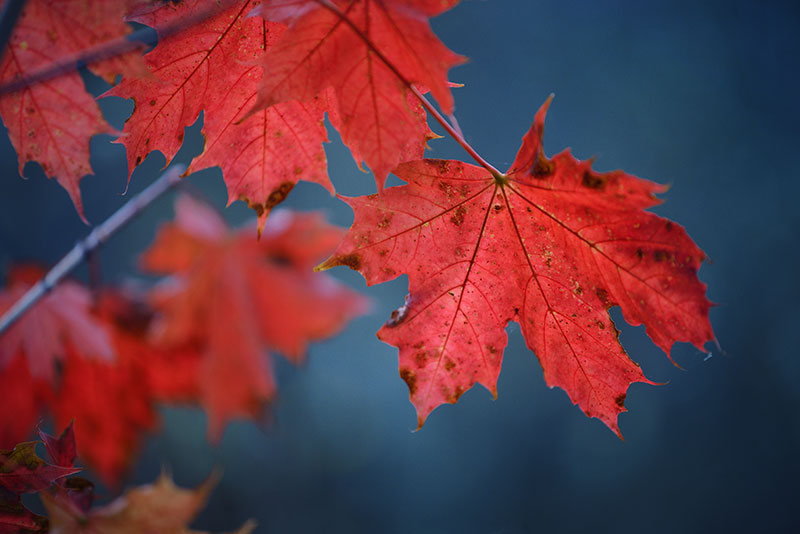 nature photos of fall leaves