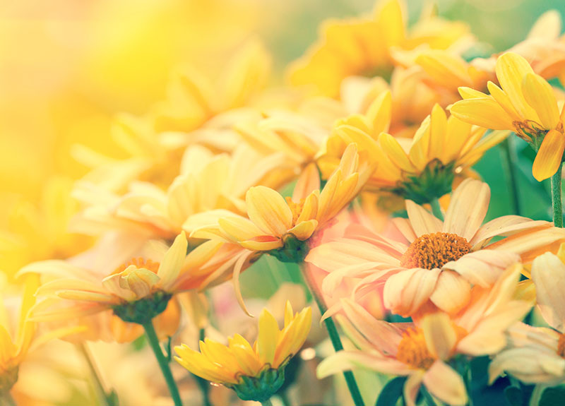 nature stock photos - yellow flowers