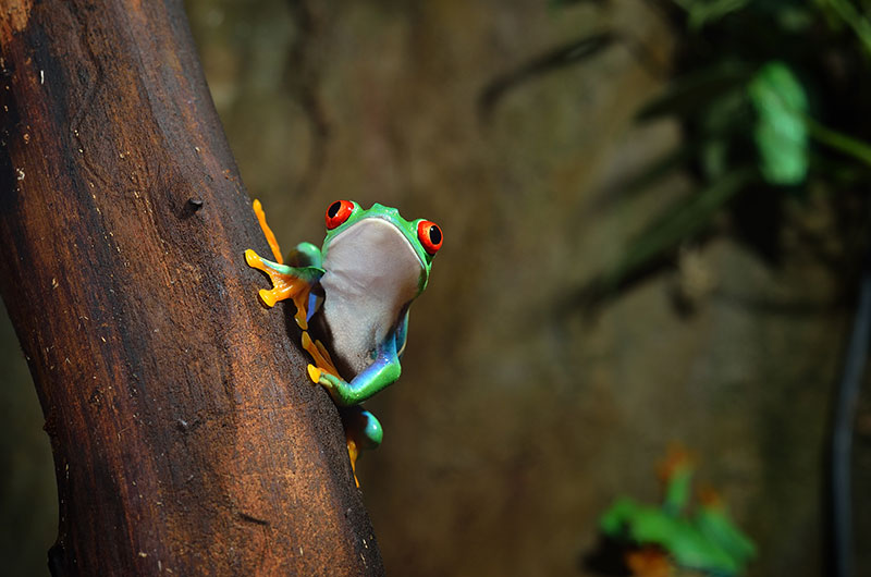 tree-frog-nature-photo
