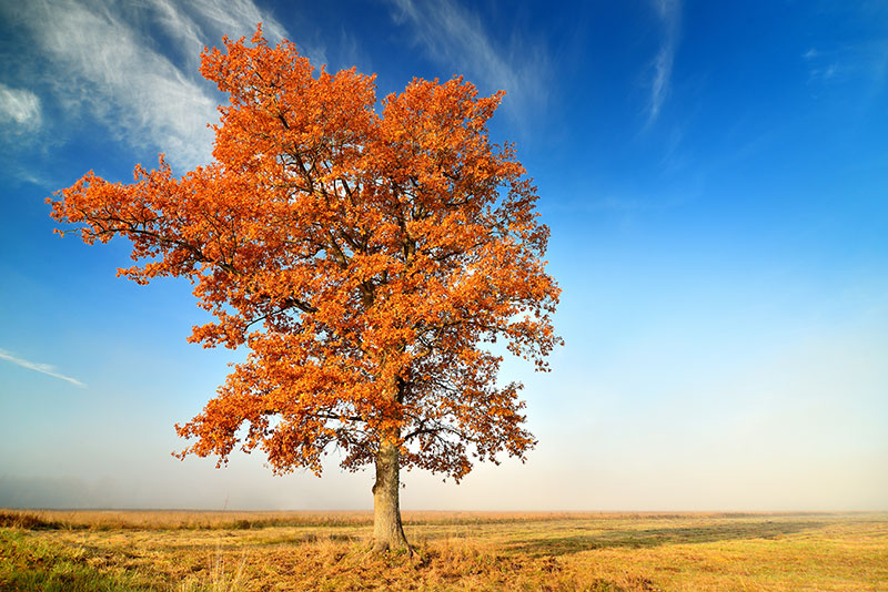 nature stock photo of a tree