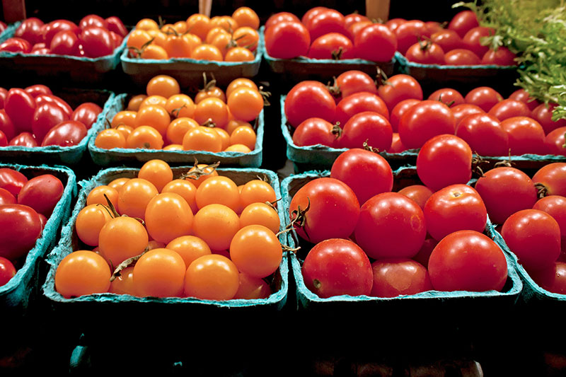farm images - tomatoes