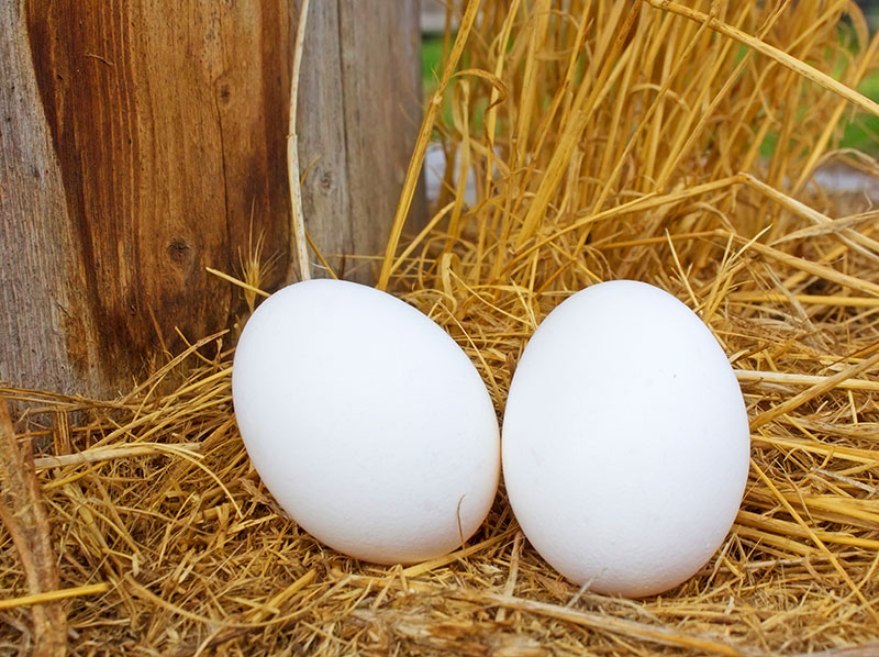 farm images - eggs