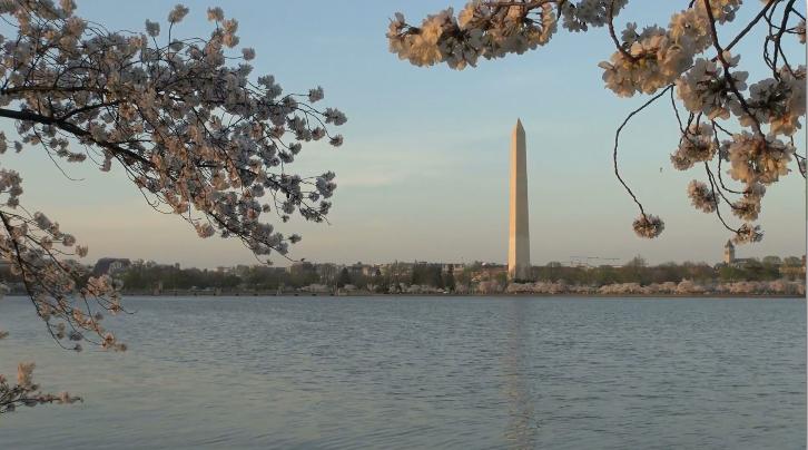 Washington D.C Stock Footage from VideoBlocks