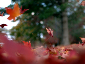 VideoBlocks Celebrates Autumn