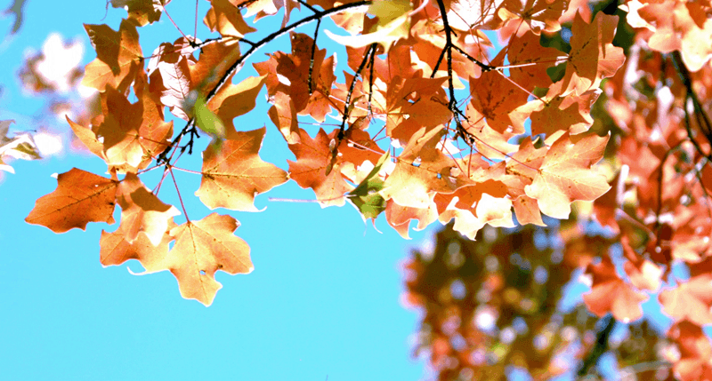 Fall for This Stock Fall Footage
