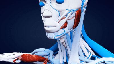Medical-Animation-2-minpngresized10