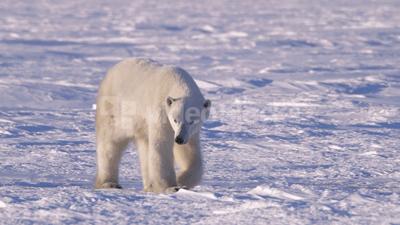 bear-400-min