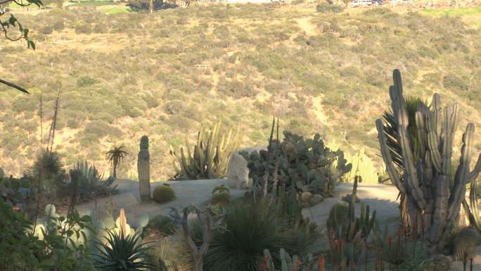 Desert plants and fauna Stock Photo