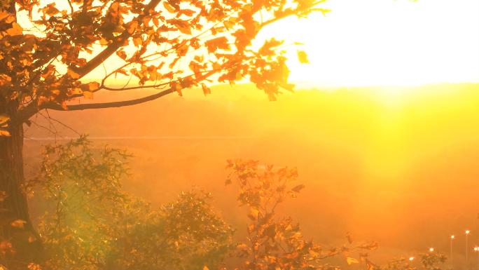 Autumn Sunset With Tree Stock Photo