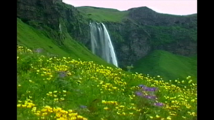 Waterfall & flowers Iceland Stock Photo
