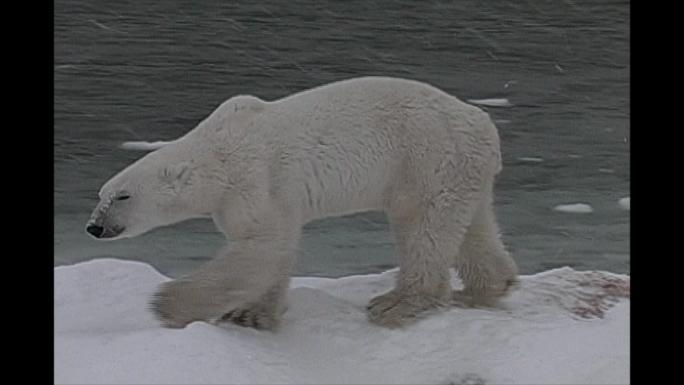 Polar bear by water Stock Photo