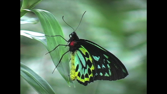 multicolored butterfly Stock Photo