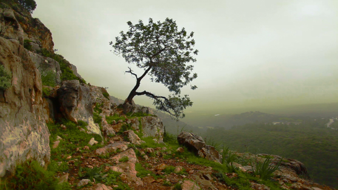 Lone Tree Growing Out of Mountainside Stock Photo