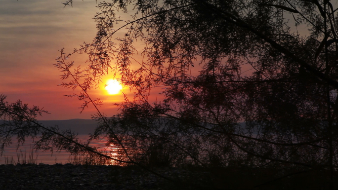 Sunset at Sea of Galilee with Tree Stock Photo