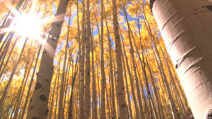 Fall Trees with Sunlight Beaming Through 2 Stock Photo