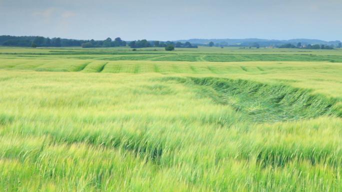 Grass Field in Copenhagen, Denmark Stock Photo