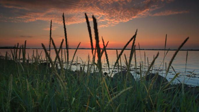 Grassy Beach at Sunset Stock Photo