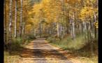 Road Through Colorado Forest Near Aspen