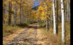 Tree Lined Mountain Road in Colorado