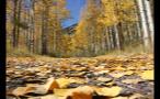 Yellow Fallen Leaves on Mountain Road Near Aspen