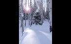 Snowy Christmas Tree in Colorado Forest