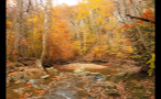 Small Forest Creek in Autumn