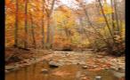 Rocky Creek in the Woods