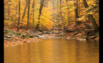 Little Creek in Multicolored Fall Forest