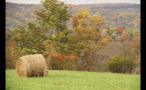 Hay Bale in Pasture