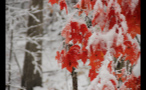 Snow on Multicolored Leaves in Woods