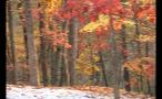 Snow on Ground in Autumn Forest