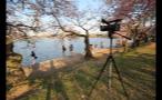 Filming Cherry Blossom Festival