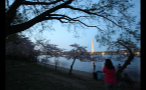Night Time at Cherry Blossom Festival in DC