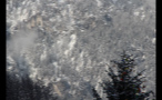 Mountain Forest Covered in Snow