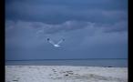 Seagull Flying Over Marthas Vineyard Beach