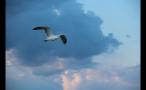 Seagull and Marthas Vineyard Sunset