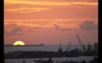 Birds Flying Near Island Cranes at Sunset