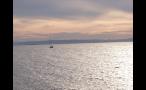 Sailboat Sailing in Puget Sound at Sunset