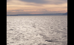 Large Ship in Puget Sound at Sunset