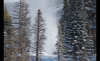 Snowy Forest in Vail