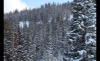 Forest Going Up Mountain in Vail Colorado