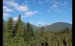 Whistler Mountain Tree Tops