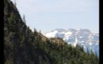 Trees Along Mountainside