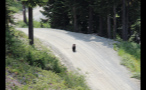 Bear Cub Going To Trees