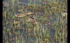 Ducks Swimming In Lake