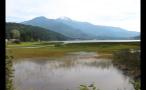 Whistler Marshland