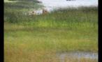 Kayaking Through Marsh