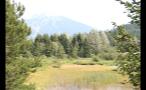 Whistler Forest Marshland 2